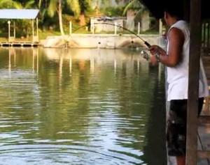 umpan jitu ikan bawal air tawar