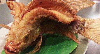 Rahasia Umpan Mancing Ikan Nila Liar