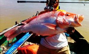 mancing ikan kakap ukuran besar