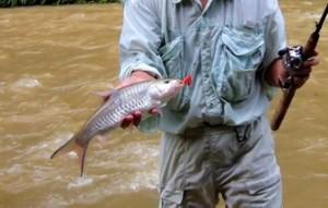 umpan mancing ikan hampala