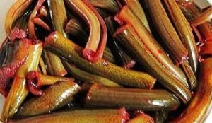 umpan jitu mancing ikan kelabau