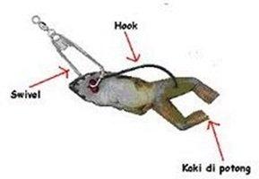 cara memasang umpan katak