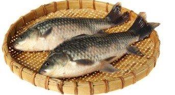 Ampuh umpan mancing ikan mas lomba galatama