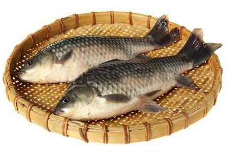 Ampuh Umpan Mancing Ikan Mas Lomba Galatama Umpan Ikan