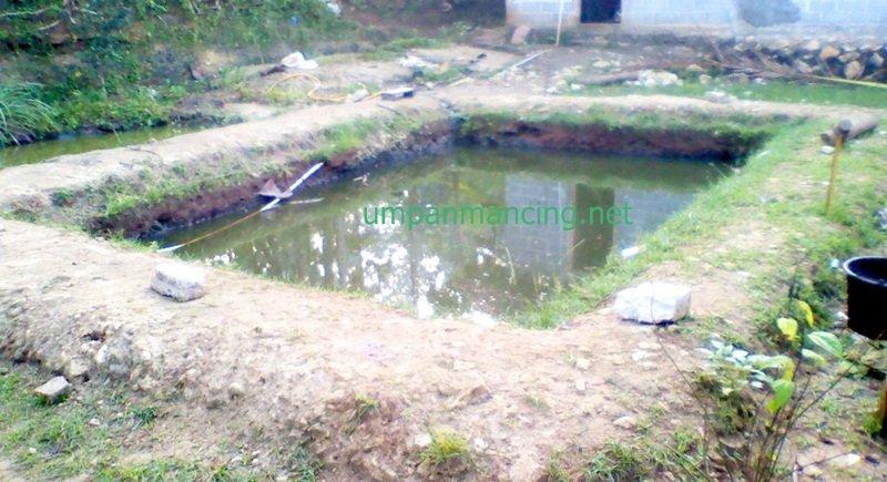 ternak lele di kolam tanah